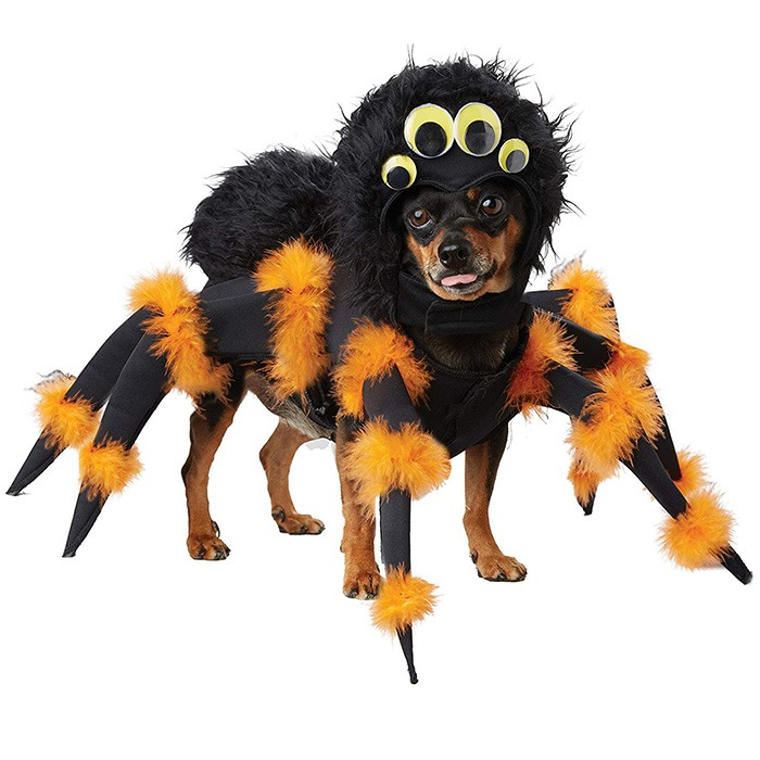 Tarantula Spider Dog Costume 2