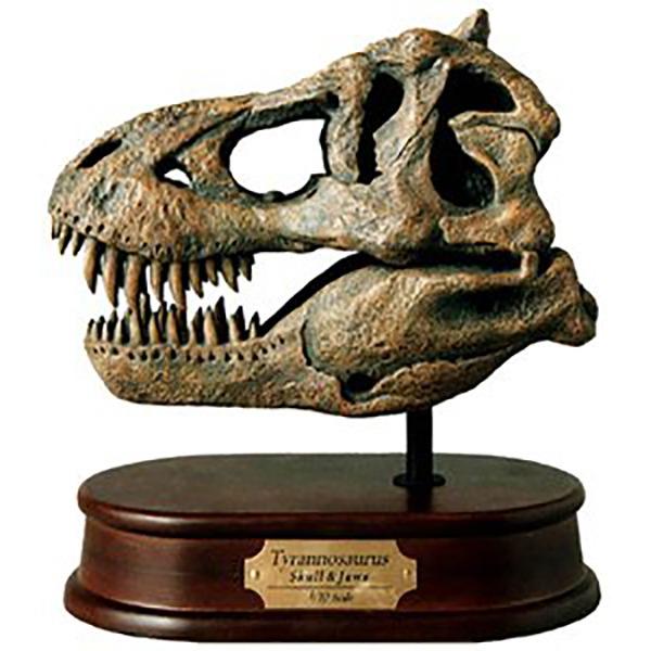 Mini T-Rex Skull