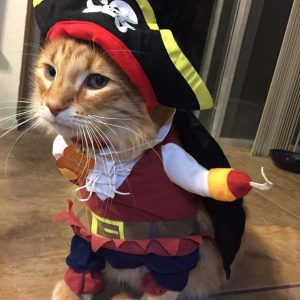 Cat Pirate Costume 6