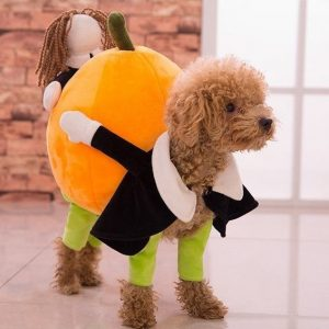 Dog Carrying Pumpkin Costume 4