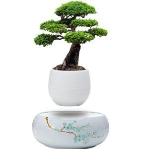 Floating Bonsai Tree.jpg
